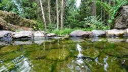 An der Wassertretanlage im Dirminger Wald